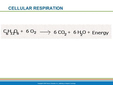Copyright © 2009 Pearson Education, Inc., publishing as Benjamin Cummings CELLULAR RESPIRATION.