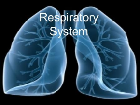 Respiratory System Functions To provide conducting passageways to allow oxygen to be used in the body to release energy Purifies, humidifies, and warms.