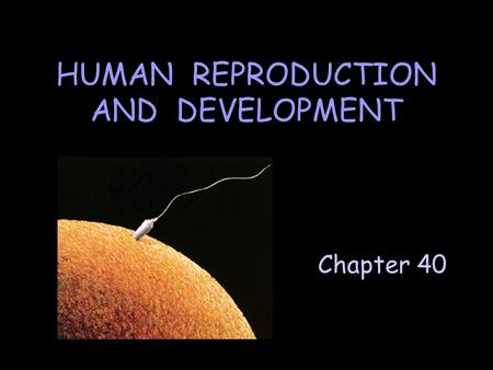 Chapter 40 HUMAN REPRODUCTION AND DEVELOPMENT. A. Male Reproductive System Consists of testes, a network of tubules & glandular secretions. Testis Scrotum.