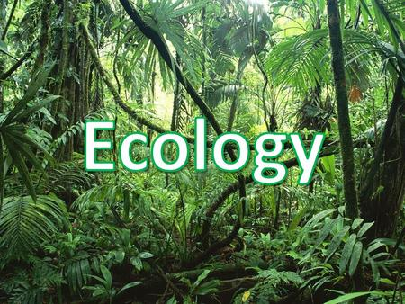 Ecology Ecology is the study of interactions between living things and their environment Remember that Ecosystems have both living and nonliving factors:
