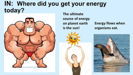 IN: Where did you get your energy today? The ultimate source of energy on planet earth is the sun! Energy flows when organisms eat.