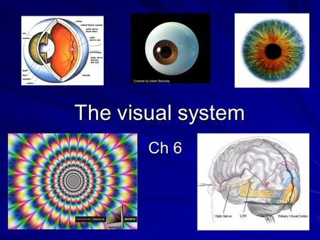 The visual system Ch 6. In general, our visual system represents the world: a) Imperfectly b) Accurately c) Better than reality.