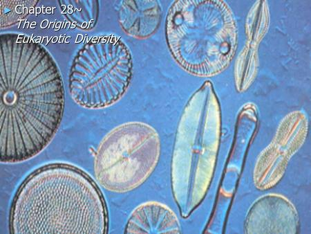 ► Chapter 28~ The Origins of Eukaryotic Diversity.