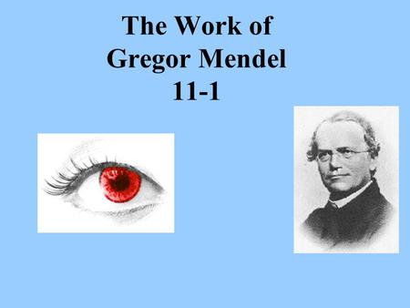 The Work of Gregor Mendel 11-1. Transmission of characteristics from _______________________is called ___________________. The _________ that studies.