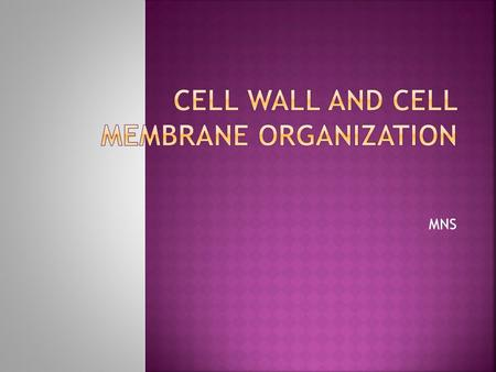 MNS. Cell Membrane and its Organization Biological membranes: The boundaries of cells are formed by biological membranes The barriers that define the.