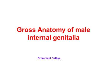 Gross Anatomy of male internal genitalia Dr Namani Sathya.