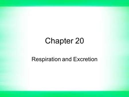 Chapter 20 Respiration and Excretion. Section 1- The Respiratory System Breathing –The process in which air moves into and out of lungs. –Partly the results.