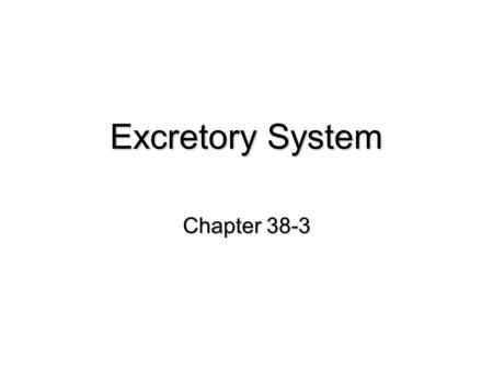 Excretory System Chapter 38-3. Kidney filters blood salt and water absorption located behind the intestines Ureter carries urine from kidney to bladder.