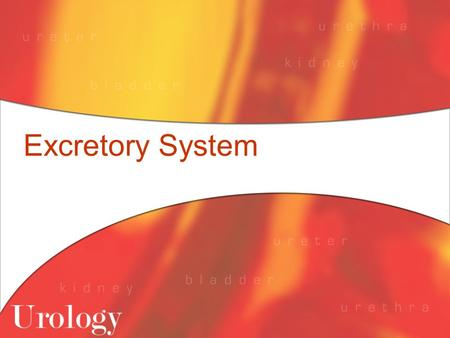 Excretory System. Functions of the Excretory System To eliminate wastes from the body If wastes aren't eliminated, toxic substances build up and damage.