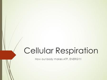 Cellular Respiration How our body makes ATP, ENERGY!!