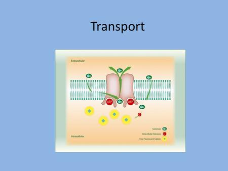 Transport. Transport Basics Passive transport –Substances move along the concentration gradient –no energy required Active transport –Substances move.