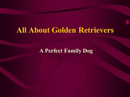 All About Golden Retrievers A Perfect Family Dog.