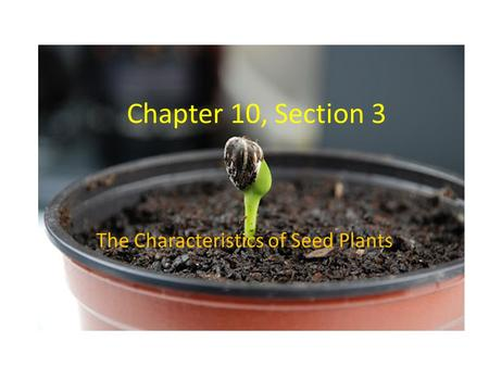 Chapter 10, Section 3 The Characteristics of Seed Plants.