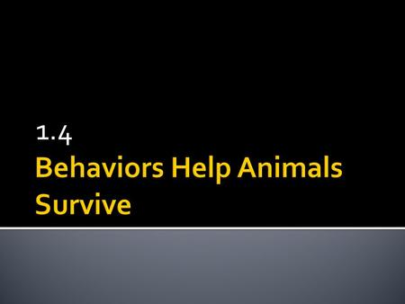1.4  Behavior: any way that an animal interacts with its environment  Includes finding food, ways that animals protect themselves, make homes, find.