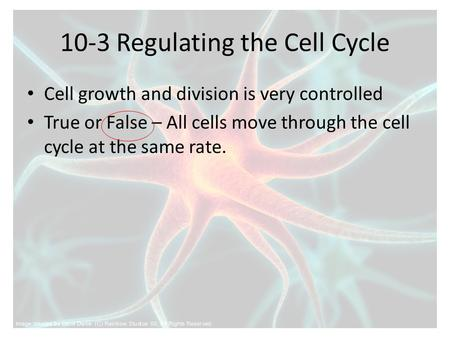 10-3 Regulating the Cell Cycle Cell growth and division is very controlled True or False – All cells move through the cell cycle at the same rate.
