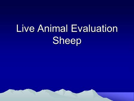 Live Animal Evaluation Sheep. Lamb Evaluation: Fat Indicators Shoulder Breast Forerib Flank.