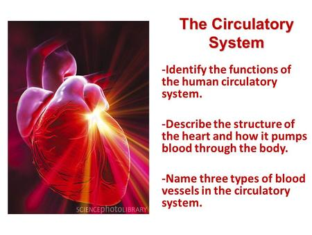 Lesson Overview Lesson Overview The Circulatory System -Identify the functions of the human circulatory system. -Describe the structure of the heart and.