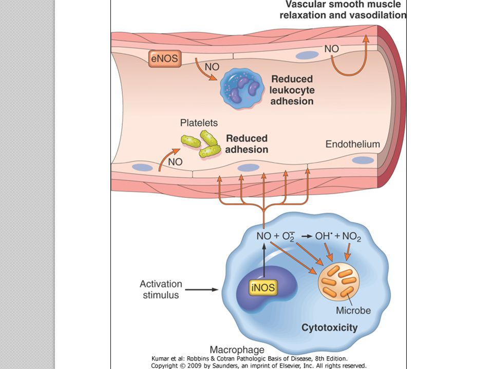 Cytokines and Chemokines Cytokines ◦ Proteins produced by many cell types  Principally activated lymphocytes and macrophages  Also endothelial, epithelial, and connective tissue cells ◦ Involved in cellular immune responses