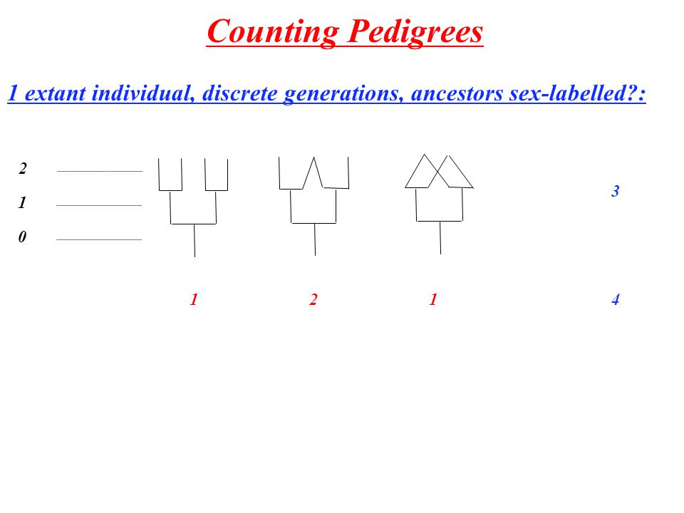 Counting Sex-Labelled Pedigrees Tong Chen & Rune Lyngsø k i'i'j'j' k-1 ij 0 1 A k (i,j) - the number of pedigrees k generations back with i females, k males 24 3279 42.8*10 7 52.8*10 20 67.4*10 52 72.8*10 131 82.9*10 317 93.5*10 749 103.9*10 1737 Recursion: S(n,m) - Stirling numbers of second kind - ways to partition n labeled objects into m unlabelled groups.