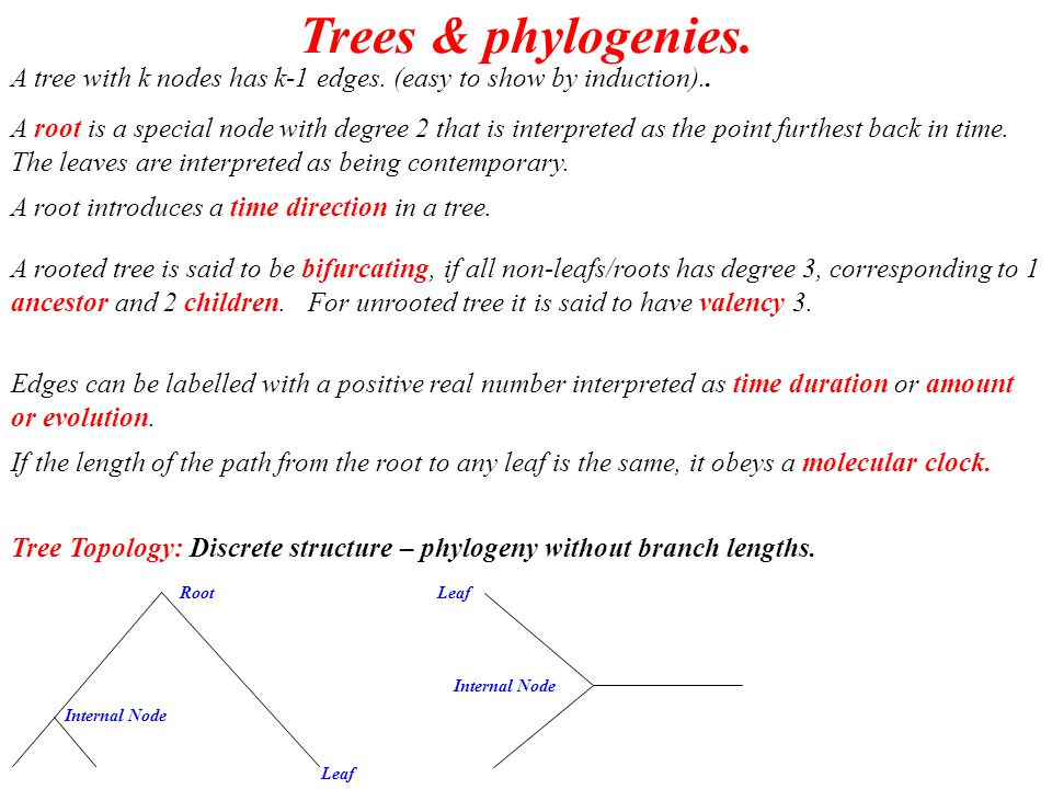 Enumerating Trees: Unrooted, leaflabelled & valency 3 2 1 3 1 4 2 3 1 2 3 4 1 2 3 4 1 2 3 4 1 2 34 1 2 34 1 2 34 1 2 34 5 55 5 5 456789101520 3 15 105945 10345 1.4 10 5 2.0 10 6 7.9 10 12 2.2 10 20 Recursion: T n = (2n-5) T n-1 Initialisation: T 1 = T 2 = T 3 =1
