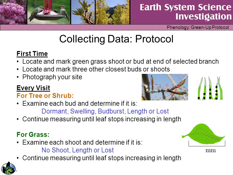 Phenology: Green-Up Protocol Enter Data on the GLOBE Web Site Green-Up and Green-Down Study Site Definition Step 1: Select Define a Green-Up/Green-Down Study Site from the Phenology data entry menu Step 2: Enter the Study Site information Step 3: Click Send Data button Step 4: Confirm data entries on verification page