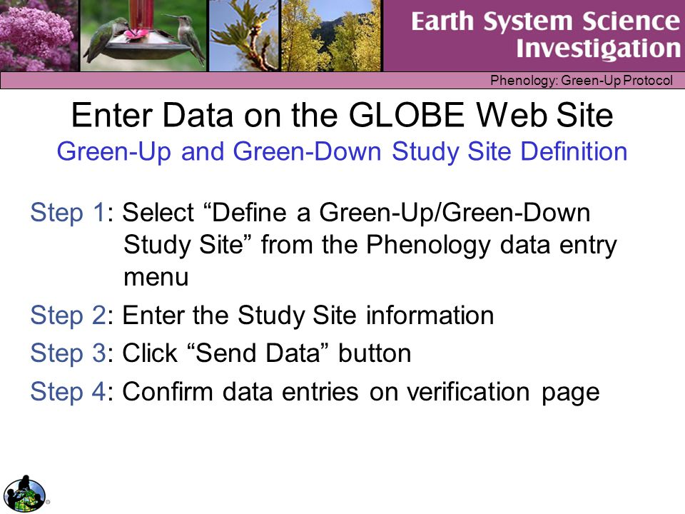 Phenology: Green-Up Protocol Enter Data on the GLOBE Web Site Green-Up Protocol Step 1: Confirm that a Green-Up Study Site has been defined Step 2: Select Green-Up from the Phenology data entry menu Step 3: Select your Study Site, enter the date and growing season cycle Step 4: Enter data for the leaves/buds from each line of the data sheet, one at a time Step 5: Confirm data entries on verification page