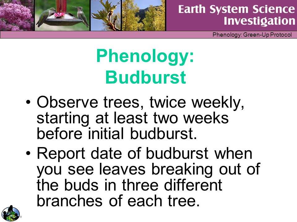 Phenology: Green-Up Protocol Classroom Implementation Inquiry Curriculum/Standards Alignment Assessment Classroom Management