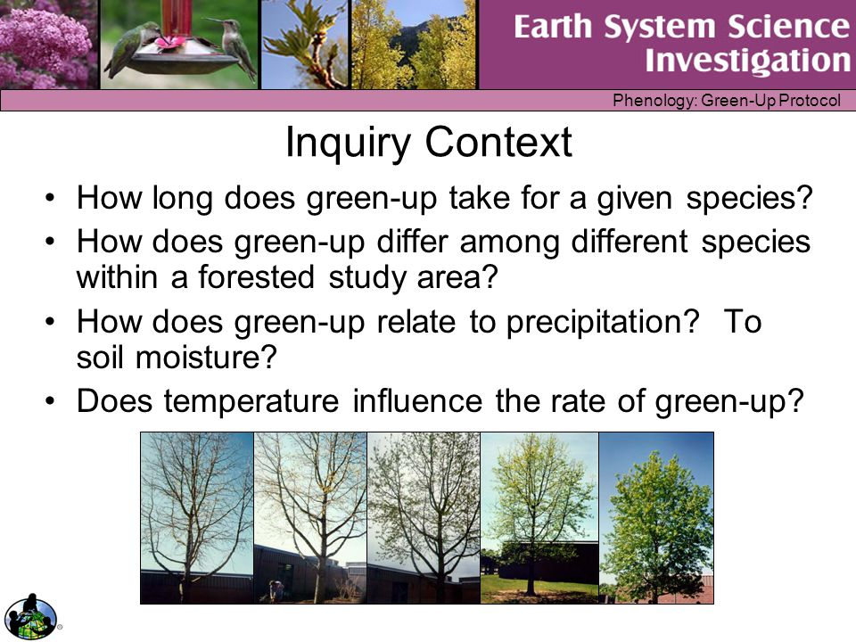 Phenology: Green-Up Protocol Local Inquiry Example How does green-up vary within a tree How does the rate of green-up of a dominant species vary within your city or town?