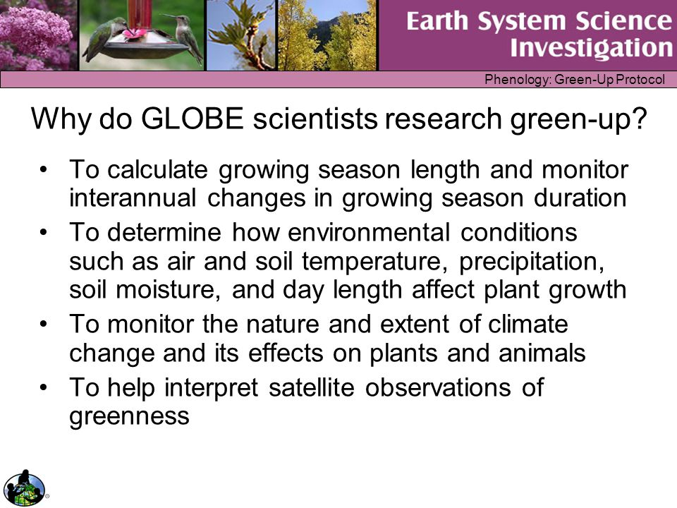 Phenology: Green-Up Protocol Science Content: What is green-up.