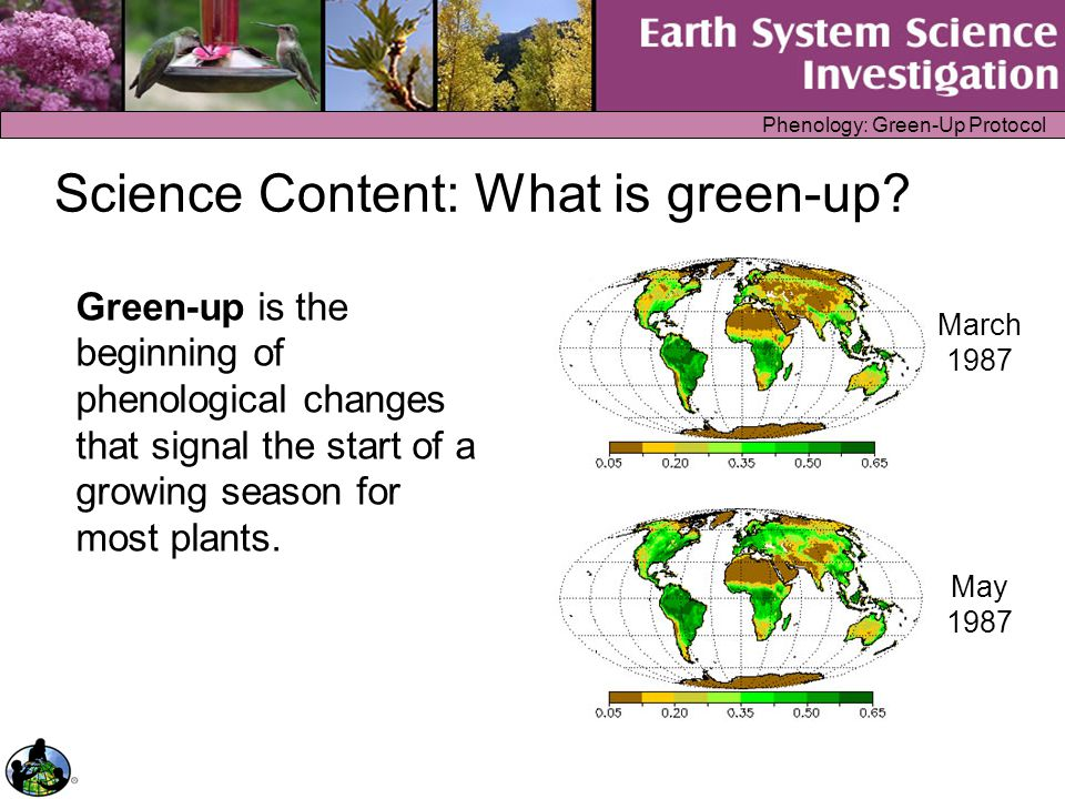 Phenology: Green-Up Protocol Science Content: Important Definitions Swelling is seen when the bud is getting bigger.