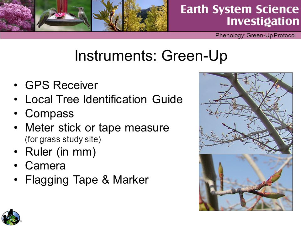 Phenology: Green-Up Protocol The Measurements Green-Up Study Site Definition –GPS Measurement –Tree and shrub species or grass genus –Study Site pictures Green-Up Protocol –For tree or shrub: date, bud condition or leaf length on four buds of the same branch –For grass: date, blade length on first four shoots to emerge