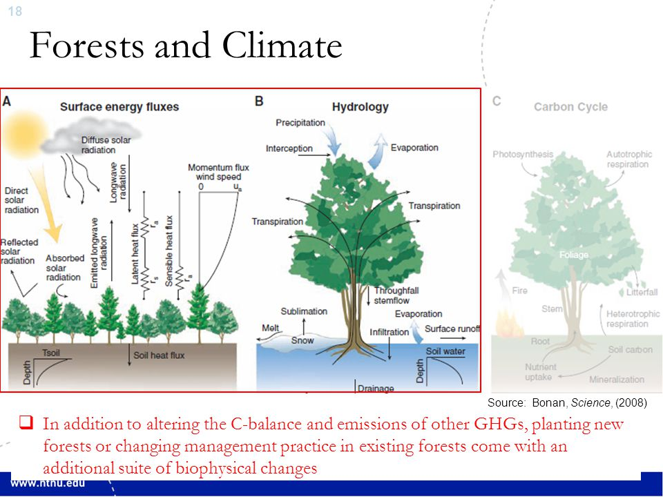 19 Forests and Climate  Q N + Q H + Q LE + Q G = W/m 2, where Q N = Q S (1-Albedo) + ↓Q LW - ↑Q LW QHQH Q LE ↓Q LW ↑Q LW Albedo QSQS QGQG Nomenclature Q N = Net radiative flux at top of atmosphere Q H = Turbulent sensible heat flux Q LE = Turbulent latent heat flux (evaporation/transpiration) Q G = Heat flux into Earth's surface Q S = Solar irradiance ↓Q LW = Downward atmospheric irradiance ↑Q LW = Upward surface irradiance Blue = Non-radiative land use forcing variables Red = Radiative forcing variables Indirect effect