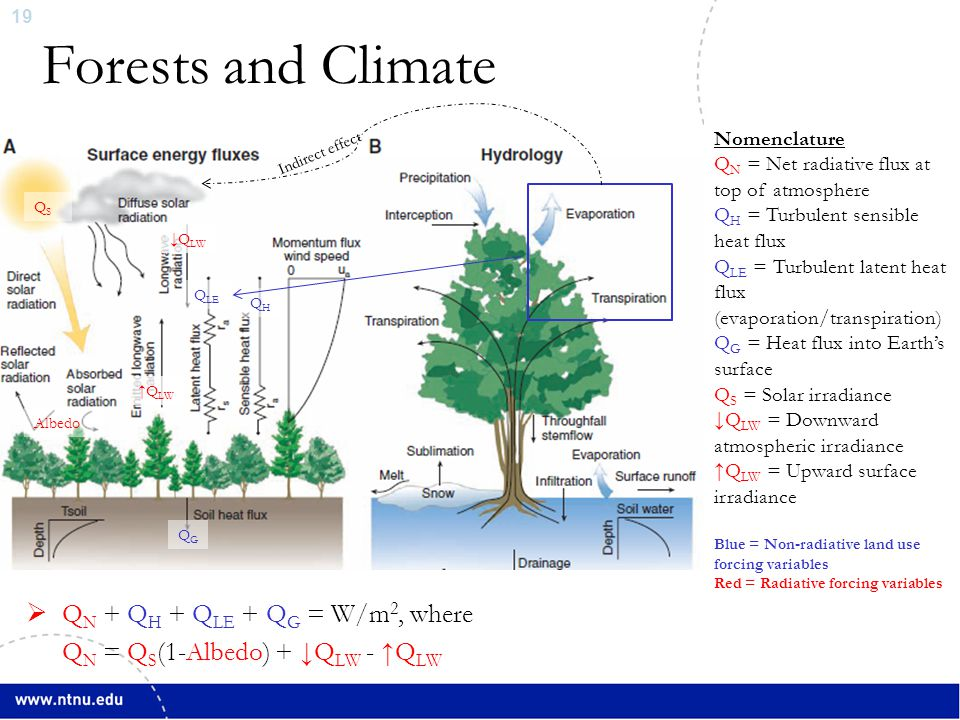 20 Forests and Climate ∆Q N + Q H + Q LE + Q G = ∆W/m 2, where ∆Q N = Q S (1-∆Albedo) + ↓Q LW - ↑Q LW QHQH Q LE ↓Q LW ↑Q LW ∆Albedo QSQS QNQN QGQG Nomenclature Q N = Net radiative flux at top of atmosphere Q H = Turbulent sensible heat flux Q LE = Turbulent latent heat flux (evaporation/transpiration) Q G = Heat flux into Earth's surface Q S = Solar irradiance ↓Q LW = Downward atmospheric irradiance ↑Q LW = Upward surface irradiance Blue = Non-radiative land use forcing variables Red = Radiative forcing variables A change ( ∆ ) to any variable due to a land surface change induces a climate forcing in W/m 2 Indirect effect