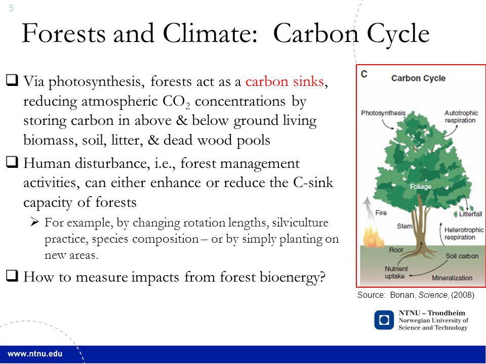6 Forests and Climate: Carbon Cycle Source: Bonan, Science, (2008)  Time-integrated emission metrics like GWP pose challenges for attributional type assessments (LCA, Carbon Footprint, etc.) of bioenergy sourced from slow-growth boreal forest biomass  Are CO 2 from biomass combustion climate neutral?