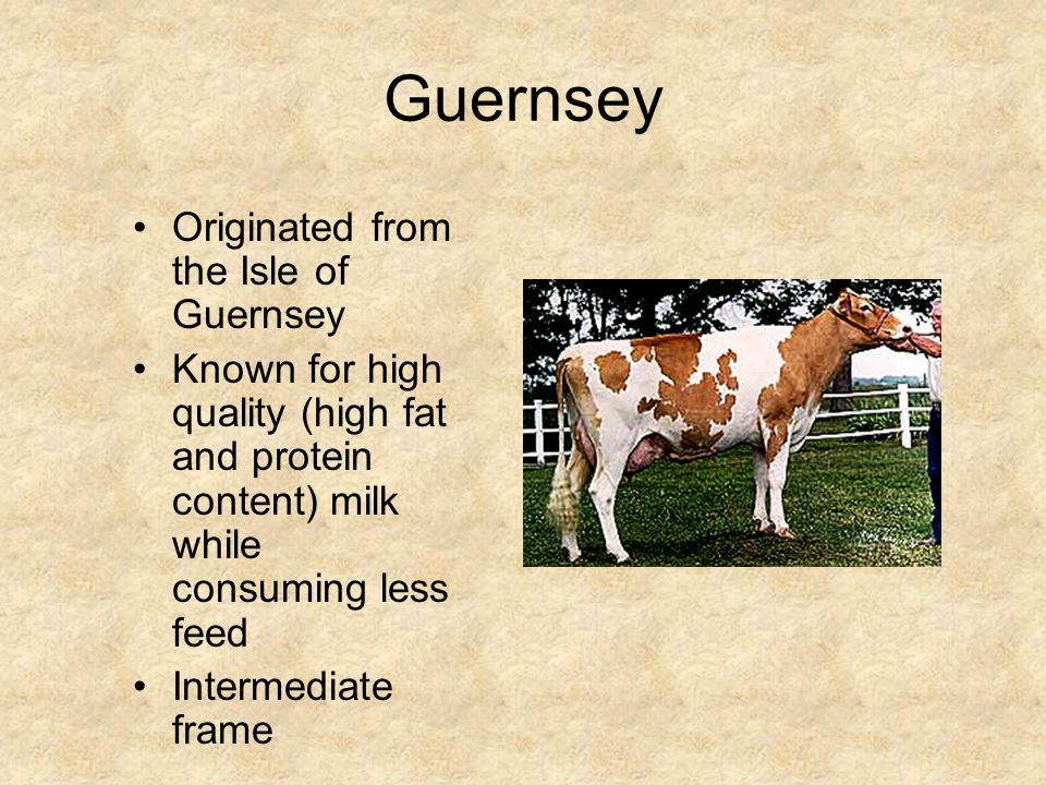 Holstein Originated in Europe Large frame Color: black and white or red and white Known for outstanding milk production