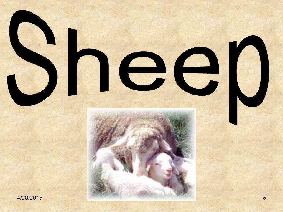 6 Giving Birth: Newly Born: Young Male: Young Female: Lambing Lamb Ram Ewe