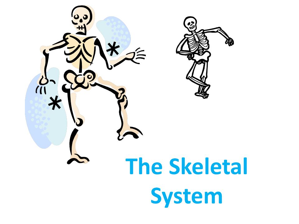 Appendicular Skeleton The appendicular skeleton is made up of the bones of the limbs and their supporting elements (girdles) that connect them to the trunk Pectoral girdles attach the upper limbs to the body trunk Pelvic girdle secures the lower limbs