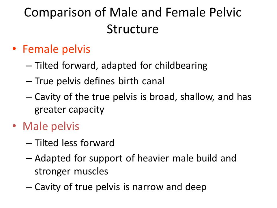 Comparison of Male and Female Pelvic Structure Table 7.4
