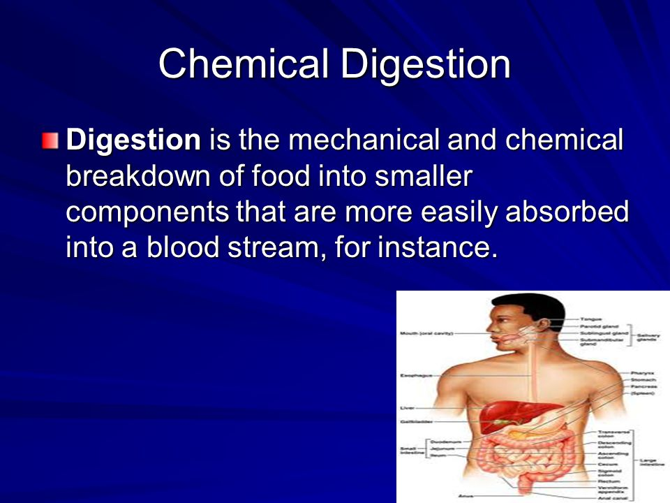Mechanical Digestion The digestive system is of vital biological importance to the body.