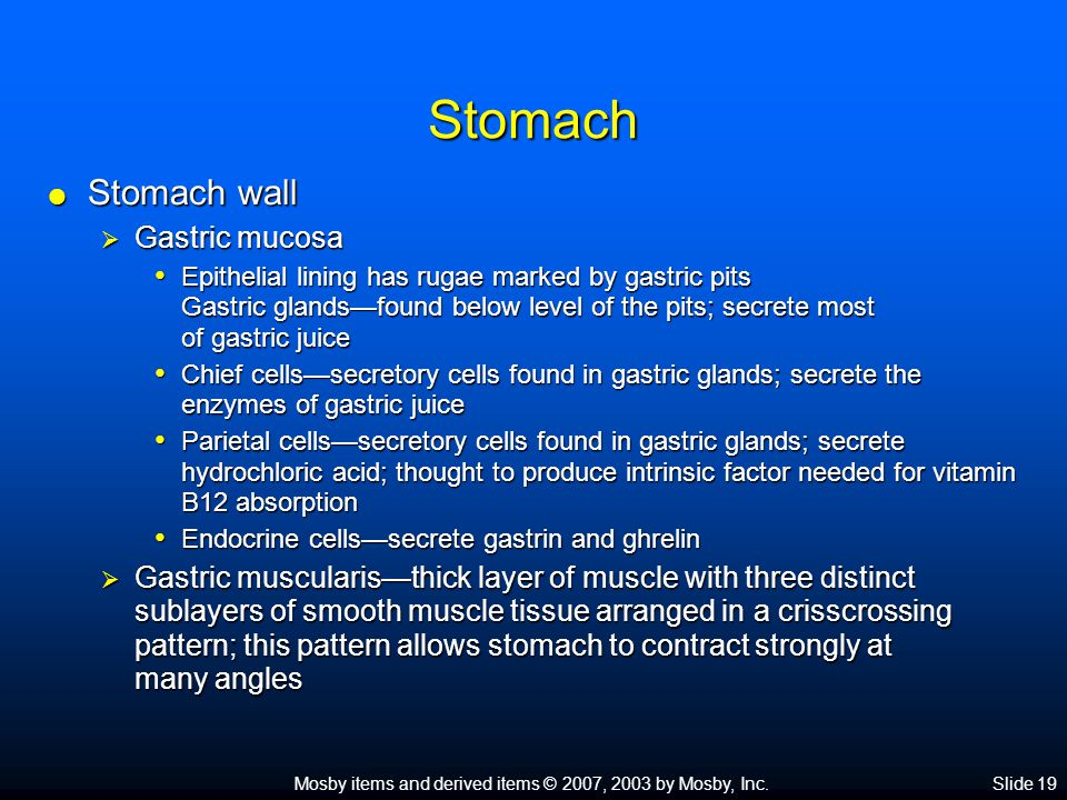Mosby items and derived items © 2007, 2003 by Mosby, Inc.Slide 20 Stomach  Functions of the stomach  Reservoir for food until it is partially digested and moved further along GI tract  Secretes gastric juice to aid in digestion of food  Breaks food into small particles and mixes them with gastric juice  Secretes intrinsic factor  Limited absorption  Produces gastrin and ghrelin  Helps protect body from pathogenic bacteria swallowed with food