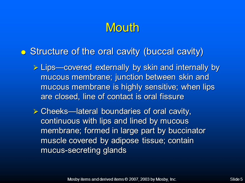 Mosby items and derived items © 2007, 2003 by Mosby, Inc.Slide 6 Mouth  Structure of the oral cavity (buccal cavity) (cont.)  Hard and soft palates Hard palate consists of portions of four bones: two maxillae and two palatines Hard palate consists of portions of four bones: two maxillae and two palatines Soft palate forms partition between the mouth and the nasopharynx and is made of muscle arranged in an arch Soft palate forms partition between the mouth and the nasopharynx and is made of muscle arranged in an arch Suspended from midpoint of posterior border of the arch is the uvula Suspended from midpoint of posterior border of the arch is the uvula  Tongue—solid mass of skeletal muscle covered by a mucous membrane; extremely maneuverable (Figure 25-4) Important for mastication and deglutition Important for mastication and deglutition Has three parts: root, tip, and body Has three parts: root, tip, and body Papillae located on dorsal surface of tongue Papillae located on dorsal surface of tongue Lingual frenulum anchors tongue to floor of mouth Lingual frenulum anchors tongue to floor of mouth