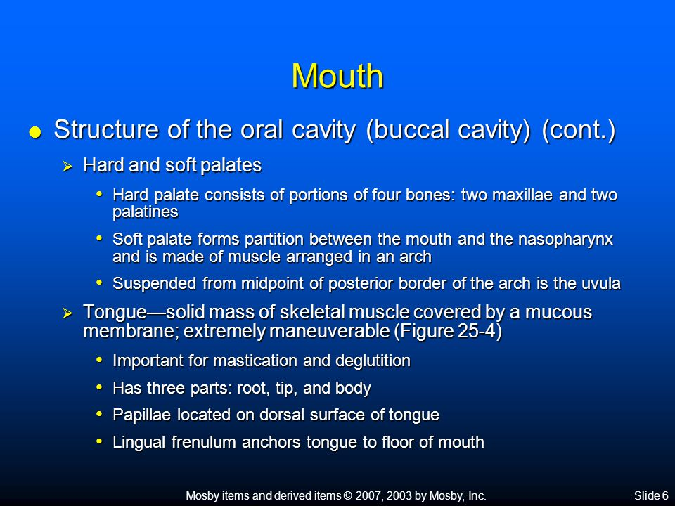 Mosby items and derived items © 2007, 2003 by Mosby, Inc.Slide 7 Mouth  Salivary glands—three pairs of compound tubuloalveolar glands secrete approximately 1 liter of saliva each day; buccal glands contribute less than 5% of total salivary volume but provide for hygiene and comfort of oral tissues  Parotid glands—largest of the paired salivary glands; produce watery saliva containing enzymes  Submandibular glands—compound glands that contain enzyme and mucus-producing elements  Sublingual glands—smallest of the salivary glands; produce a mucous type of saliva