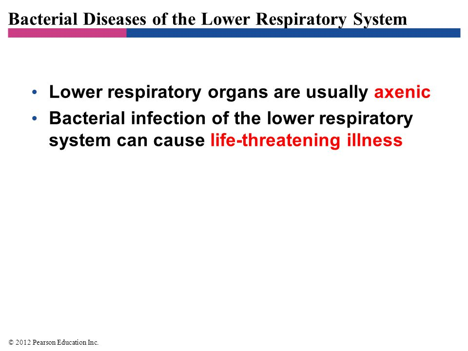 Bacterial Diseases of the Lower Respiratory System Bacterial Pneumonias –Lung inflammation accompanied by fluid– filled alveoli and bronchioles –Described by affected region or organism causing the disease –Bacterial pneumonias are the most serious and the most frequent in adults © 2012 Pearson Education Inc.