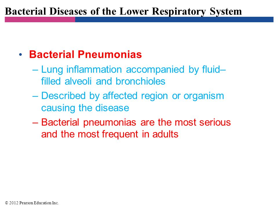 Bacterial Diseases of the Lower Respiratory System Pneumoccocal Pneumonia –Signs and symptoms –Short, rapid breathing; rust-colored sputum –Pathogen and virulence factors –Caused by Streptococcus pneumoniae –Virulence factors include adhesins, capsule, pneumolysin –Pathogenesis and epidemiology –Infection occurs by inhalation of bacteria –Bacterial replication causes damage to the lungs –Diagnosis, treatment, and prevention –Penicillin is the drug of choice for treatment –Vaccination is method of prevention © 2012 Pearson Education Inc.