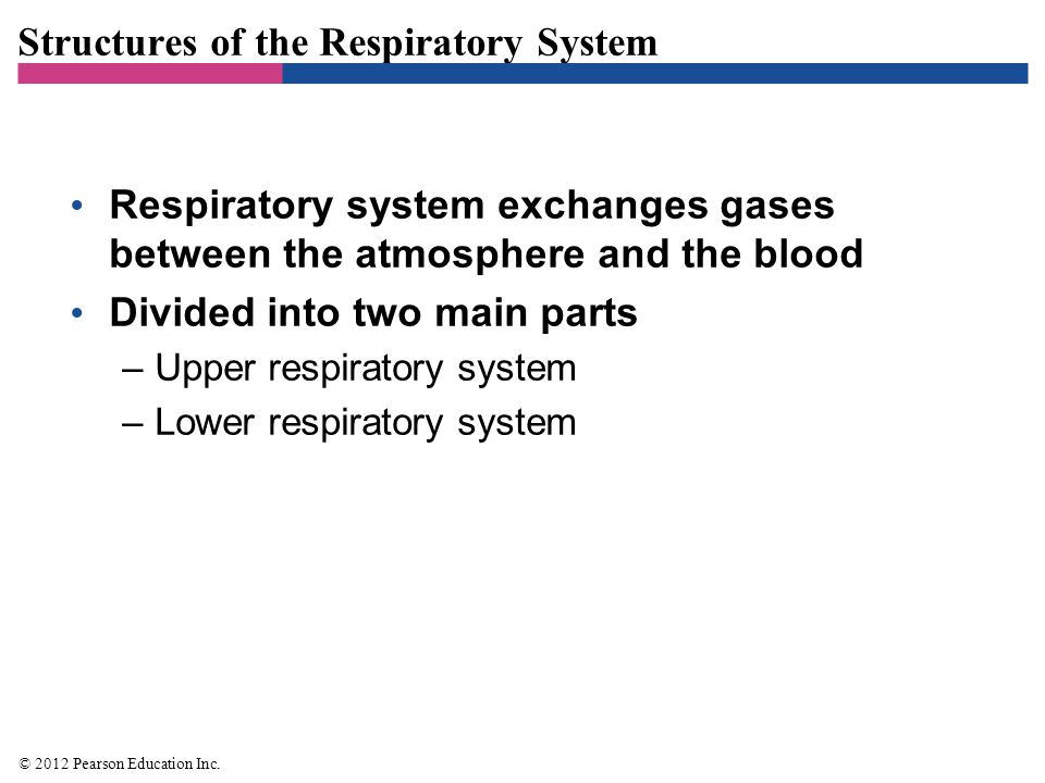 Structures of the Respiratory System Structures of the Upper Respiratory System, Sinuses, and Ears –Components of the upper respiratory system –Nose –Nasal cavity –Pharynx –Tonsils –Mucus © 2012 Pearson Education Inc.