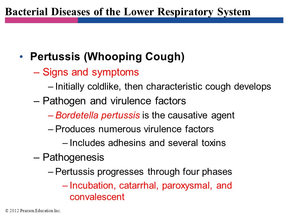 Bacterial Diseases of the Lower Respiratory System Pertussis (Whooping Cough) –Epidemiology –Highly contagious –Bacteria spread through the air in airborne droplets –Diagnosis, treatment, and prevention –Symptoms are usually diagnostic –Treatment is primarily supportive –Prevention is with the DTaP vaccine © 2012 Pearson Education Inc.