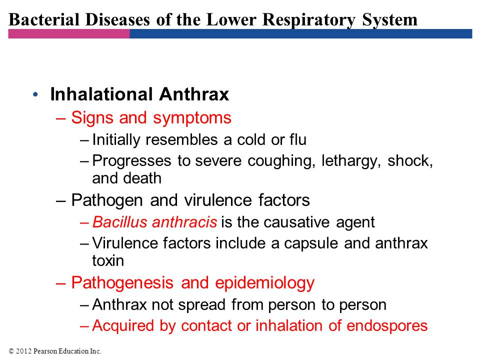 Bacterial Diseases of the Lower Respiratory System Inhalation Anthrax –Diagnosis, treatment, and prevention –Diagnosis based on identification of bacteria in sputum –Early and aggressive antimicrobial treatment necessary –Anthrax vaccine available to select individuals © 2012 Pearson Education Inc.