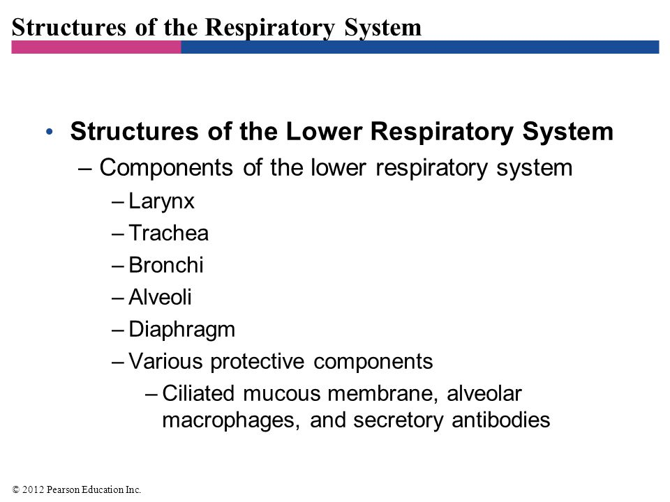 Figure 22.1 Structures of the respiratory system-overview