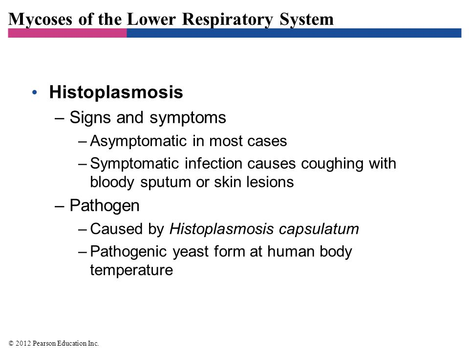 Mycoses of the Lower Respiratory System Histoplasmosis –Pathogenesis and epidemiology –Humans inhale airborne spores from the soil –Prevalent in the eastern U.S.