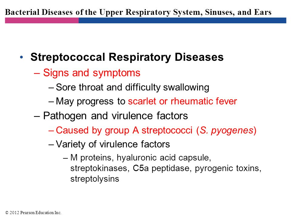 Bacterial Diseases of the Upper Respiratory System, Sinuses, and Ears Streptococcal Respiratory Diseases –Pathogenesis –Occurs when normal microbiota are depleted, large inoculum is introduced, or adaptive immunity is impaired –Epidemiology –Spread via respiratory droplets –Occurs most often in winter and spring –Diagnosis, treatment, and prevention –Often confused with viral pharyngitis –Penicillin is an effective treatment © 2012 Pearson Education Inc.